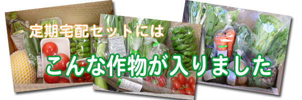 無肥料かつ無農薬栽培の野菜・果物の定期宅配セットの内容